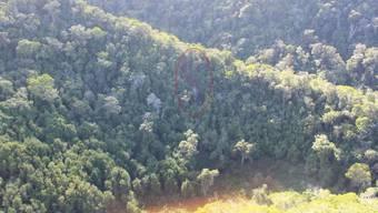 Der Rundflughelikopter stürzte am Donnerstag auf der Insel Kauai auf Hawaii in hügligem und schwer zugänglichem Gelände ab.