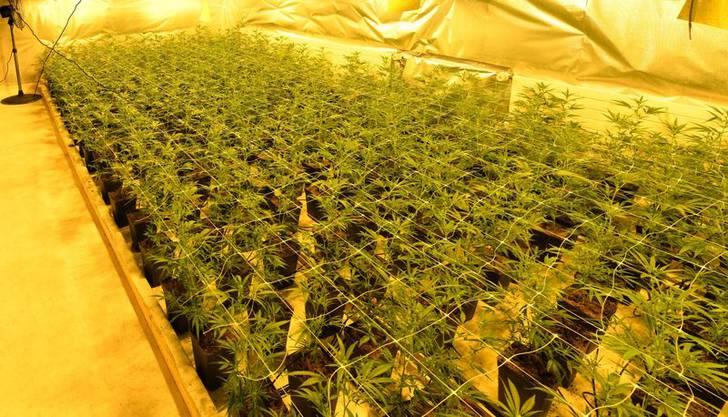 Grub und Wald AR, 20. Mai: Die Kantonspolizei Appenzell-Ausserrhoden hat zwei professionell eingerichtete Hanfplantagen ausgehoben. Sie stellte rund 1000 Cannabispflanzen, 400 Stecklinge und 20 Mutterpflanzen sicher.