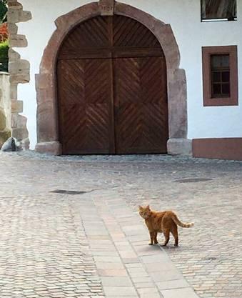 Die Altstadt ist sein Zuhause.