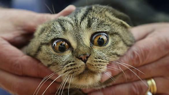 Schrille Geräusche können bei Katzen Krampfanfälle auslösen.