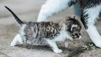 Tierschützer schlagen Alarm: Tausende Kätzchen verenden in der Schweiz jährlich qualvoll.