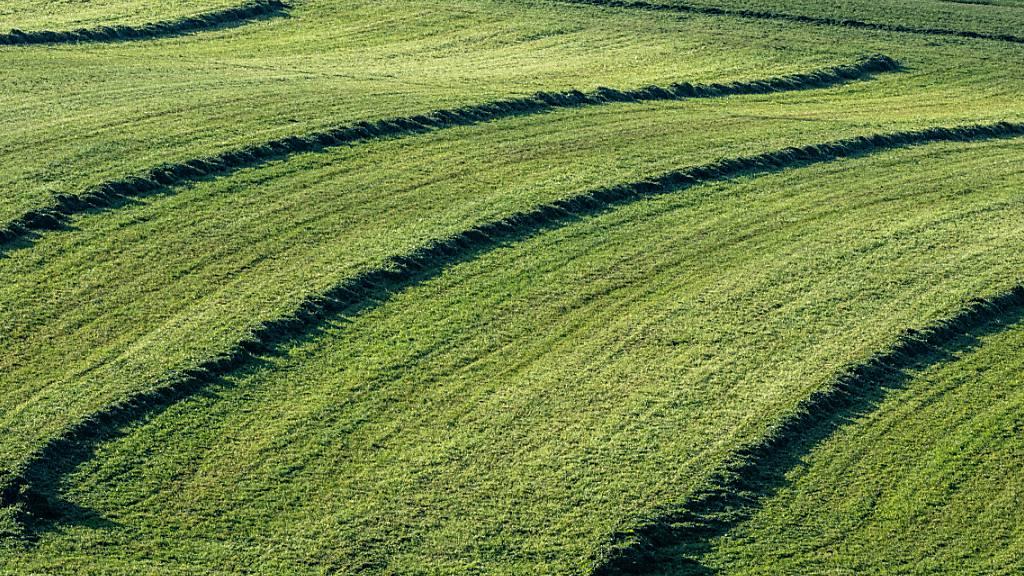 ARCHIV - Geschnittenes Gras liegt auf einer gemähten Wiese. Foto: Armin Weigel/dpa