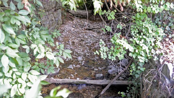 Viele Baselbieter Bäche führen noch immer wenig Wasser.