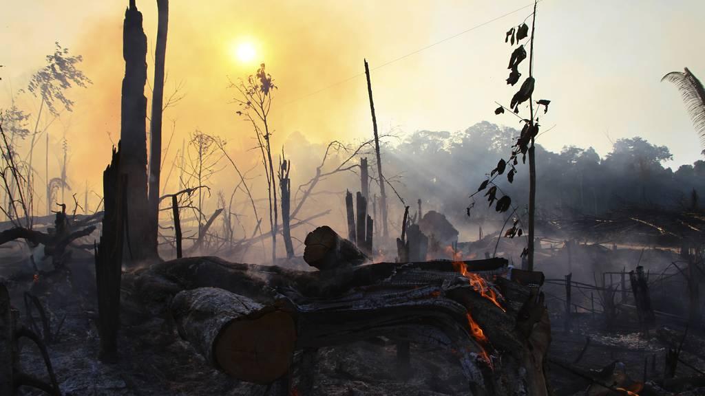 Amazonas-Regenwald stösst jetzt mehr CO2 aus als er absorbiert