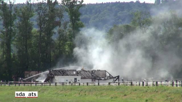 Rund 20 Pferde bei Brand in Avenches verendet