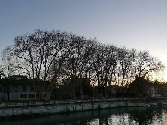 Krähenparadies im Abendlicht