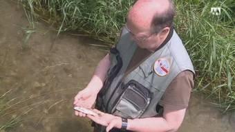 Alle Fische in einem Bach bei Reiden sind tot