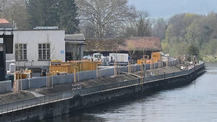 Blick auf das Aareufer zwischen Brücke und Kosthaus: Die neuen Bäume sind gesetzt, die Mauer ist fertig.