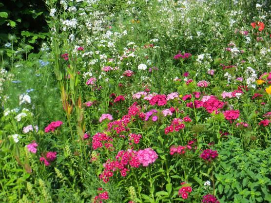 Doch schön das Blühen der Blumen beim Nachbarn.