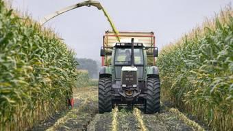 """Ein Bauer bringt seine Mais-Ernte ein. Am 24. September wird das Schweizer Stimmvolk unter anderem über den Gegenvorschlag zur zurückgezogenen Volksinitiative """"Für Ernährungssicherheit"""" entscheiden. (Archiv)"""