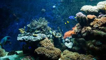 Für die Anhänger des Ozeaniums ist das eine gigantische Nachricht: Ein anonymer Spender unterstützt das Riesenbecken mit 30 Millionen Franken.