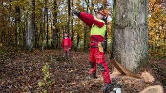 Jan Schmidlin, Forstwart in Ausbildung, bestimmt im Allschwiler Wald die Fallrichtung der Eiche.