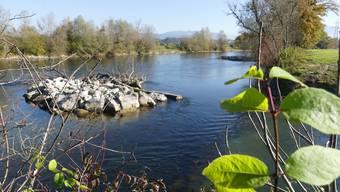 Inselbuhnen, Uferbuchten und Buhnen am Uferrand bereichern heute den Reusslauf bei Sins und verbessern die Lebensbedingungen für Jungfische.