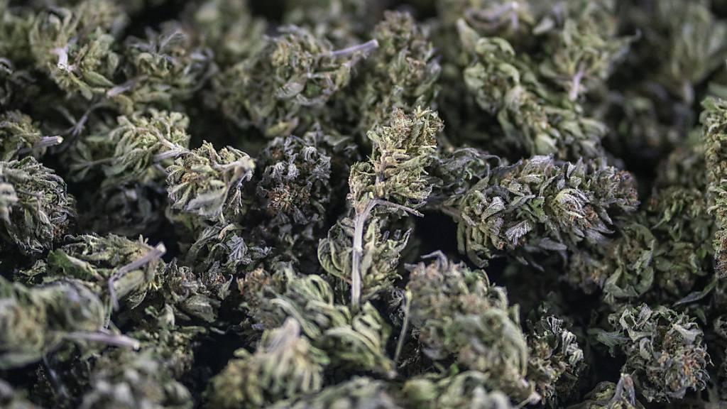 Ein Zürcher soll über 37 Millionen Franken Umsatz mit Cannabis-Handel erzielt haben. (Symbolbild)