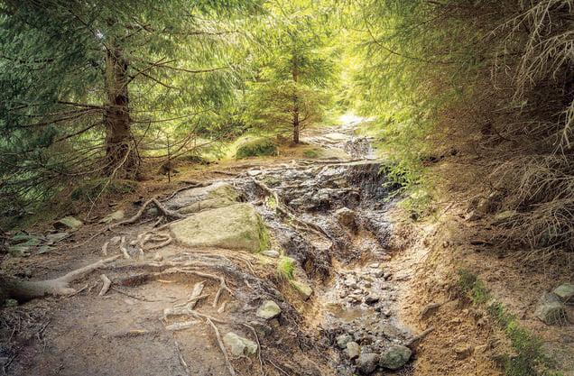 Echter Urwald mitten in Deutschland: Der sagenumwobene Nationalpark Harz gehört mit seinen 600 Kilometern Wanderwegen zu den grössten des Landes. Die dichten Fichten- und Mischwälder beflügelten bereits Johann Wolfgang von Goethe, der in seinem «Faust» Hexen auf dem Blocksberg – nach dem Berg namens Brocken, dem höchsten Berg im Harz – tanzen liess.