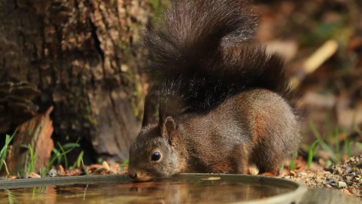 Die vielen Nüsse gaben Durst. (im Mellinger Eichenwald)