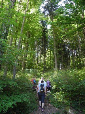 Auf schmalen Pfaden durch den Wald bei Weiningen