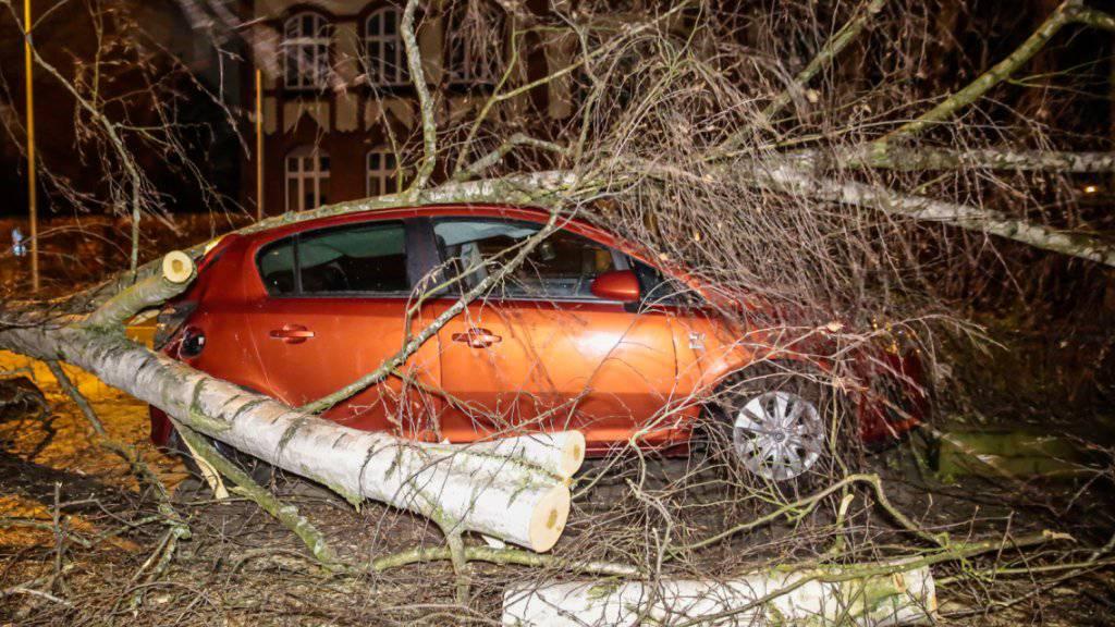 Ein wegen des Sturms auf ein Auto gestürzter Baum in Wiesbaden