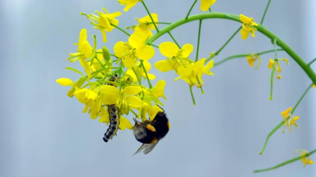 Pflanzen passen Strategien ihren Bestäubern an