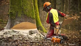 Im Winter gehts den Bäumen an de Kragen - Bilder von der Arbeit der Forstdienste Lenzia