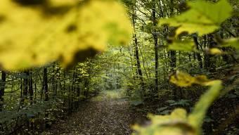 Auch die Waldbesitzer sind von der Coronakrise betroffen. Erhalten sie nun Unterstützung? (Archivbild)
