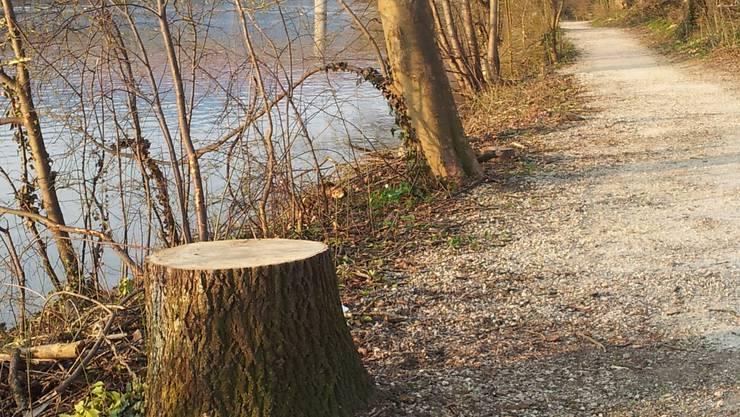 Zahlreiche Bäume wurden gefällt