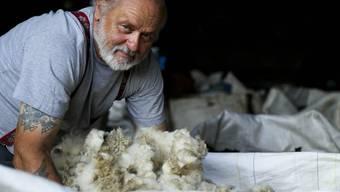 Toni Pianta sammelt rund drei Tonnen Wolle pro Jahr.