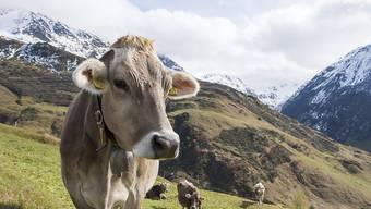 Die Agrarpolitik 2014-2017 fördert auch die Sömmerungsbetriebe (Symbolbild)