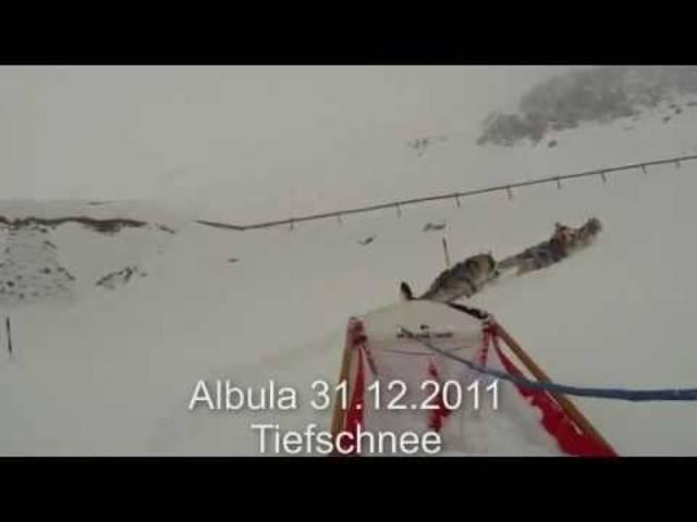 Silvester-Tour auf den Albulapass: Das Schlittenhunde-Team aus Oberflachs kämpft sich 2011 durch den Tiefschnee.