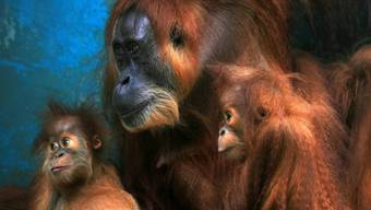 Weibchen Gober mit ihren zwei Jungtieren im Jahr 2012
