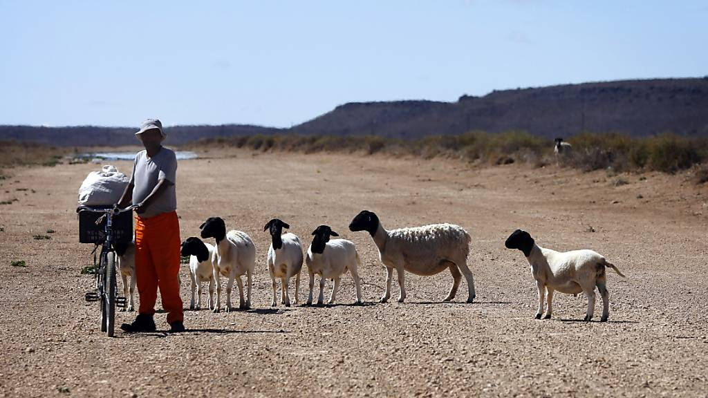 Ein Drittel der Bevölkerung könnte 2070 unter grosser Hitze leiden