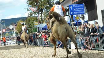 Röschenz feierte 2015 auf originelle Art: Grosse Attraktion war das Kamelrennen durch die Dorfgassen.
