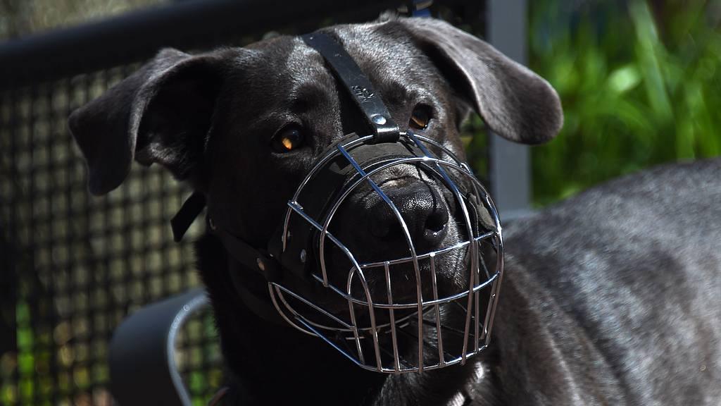 Liechtensteiner verpassen Hunden im Bus einen Korb