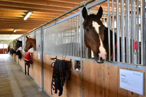 Am meisten Pferde gibt es in Mümliswil