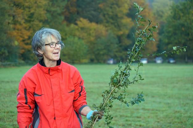 Eva Jäggi mit einem Weissdorn – einer von fast 900 Sträuchern, die in Härkingen gepflanzt wurden.