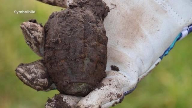 Zweifel-Chips: Handgranate unter Kartoffeln gefunden