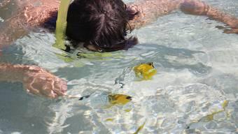 Roman Brader,11, schnorchelt in der kristallklaren Südseeinsel Rarotonga, Cook Inseln - und es ist unklar, wer wen beobachtet: der Mensch die Fische oder umgekehrt.