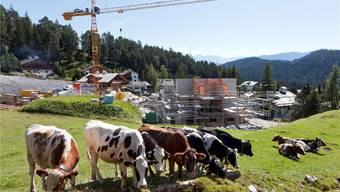 Glücklich ist, wer Kühe hat. Doch reich wird nur, wer Bauland hat. Arno Balzarini/Keystone