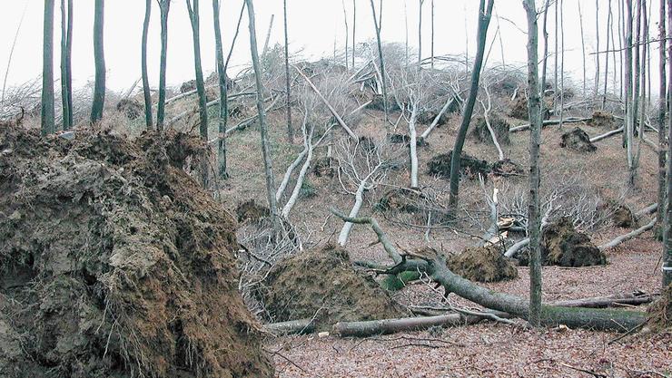 Flachgelegt von Winden: Orkan Lothar hat in vielen Wäldern für Zerstörung gesorgt.
