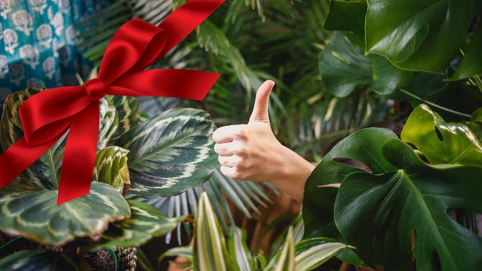 Entdeckt Geschenk-Ideen für gutes Karma