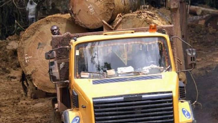 Abtransport von Stämmen des in Gabun abgehholzten Regenwalds (Archiv)