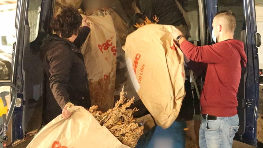 Polizei vernichtet Drogen im Wert von 24 Millionen Franken