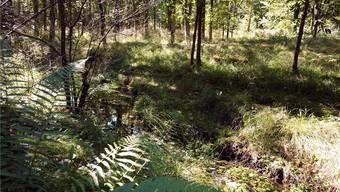 Links und rechts des Inselibächlis entstehen über 20 kleinere Tümpel und Weiher.