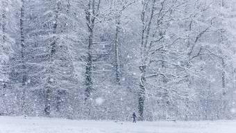 Die Schweiz bleibt die nächsten Tage weiss - zumindest in den Bergen wird viel Neuschnee erwartet (Symbolbild, Aufnahme vom 5. Januar 2019 bei Schaffhausen).