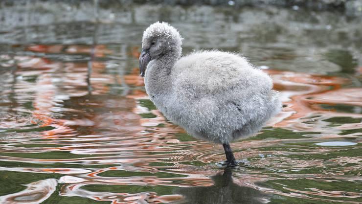 Wer die vielen Tiere im Zoo Zürich sehen will, muss künftig tiefer ins Portemonnaie greifen.