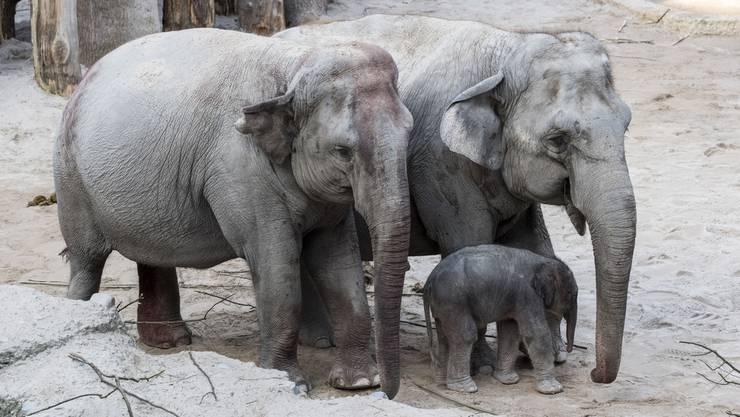 Elefanten rannten vom Fest aufgescheucht durch die Gegend.