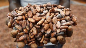 Konsumenten, Schoggi-Produzenten und Spekulanten reissen sich um sie: Die Kakaobohne.