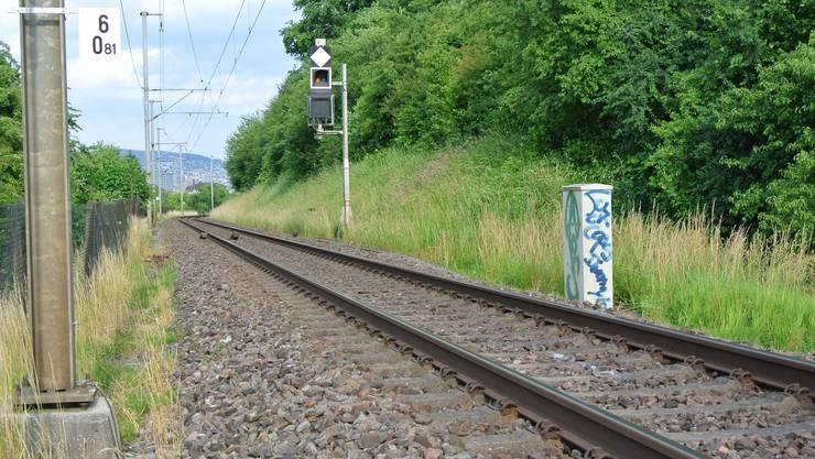 Hier wurde der Wolf von einem Zug überfahren.