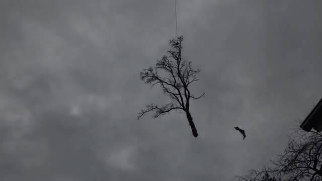 Rotex-Helikopter fliegt in Grenchen Bäume von einem Grundstück an der Bachtelenstrasse