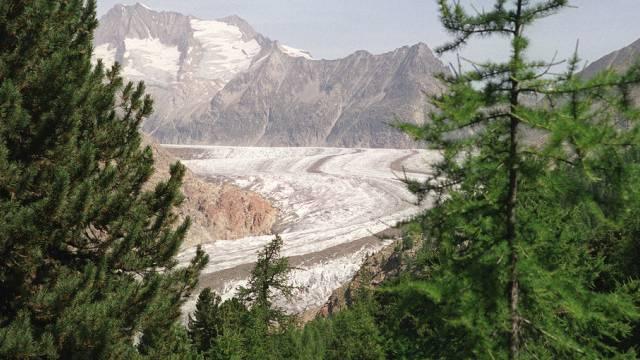 Blick auf Aletschwald und Grossen Aletschgletscher (Bild 2000)